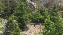 FEROMON - Çam Ağaçları 'Aşk Tuzağıyla' Korunuyor