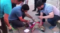 YAVRU KÖPEK - Kars'ta Yaralı Yavru Köpeğe Vatandaşlar Sahip Çıktı