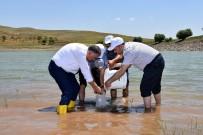 BALIK TUTMAK - Muş'taki Göl Ve Göletler Balıklandırıldı