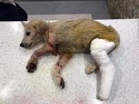 Yavru Köpeği Tüfekle Vuran Şahıs Yakalandı
