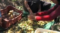 İLAÇ KALINTISI - Anlaşmalı Organik Tarımla Üreticinin Yüzü Güldü