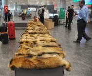 GÜMRÜK MUHAFAZA EKİPLERİ - Atatürk Havalimanı'nda Kaçak Kürk Operasyonu