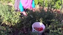 KIŞ MEVSİMİ - 'Domates Salçasının' Sofralara Yolculuğu