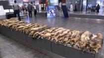 GÜMRÜK MUHAFAZA EKİPLERİ - Havalimanında 'Tilki Kürkü' Ele Geçirildi