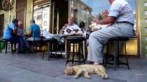 Kedi, Yavrusuna Havlayan Köpeğin Üzerine Sıçradı