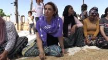 MÜLTECI - Mezopotamya'nın 'En Eski Buğday Tohumu'nda 20 Ton Rekolte