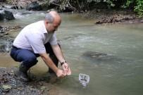 SONBAHAR - Nesli Tükenmekte Olan 7 Bin 500 Kırmızı Benekli Alabalık Akçay Deresi'ne Bırakıldı