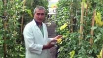 ÖMER HALİSDEMİR - Niğde'de 'Mor Patates' Üretildi