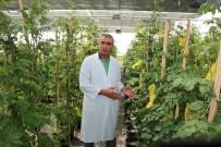 DOKTORA TEZİ - Üniversite 'Mor Patates' Geliştirdi