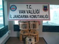 PARA CEZASI - Van'da Kafes Avcılığı Yapan 2 Kişiye Para Cezası Verildi