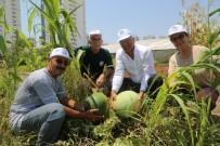 KALENDER - Başkan Tarhan Gönüllü Serasında Sebze Topladı