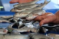 İNCİ KEFALİ - Van Balığı Tezgahlardaki Yerini Aldı