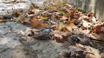 Yağmur Ve Fırtınanın Yuvalarından Düşürdüğü Binlerce Serçe Yavrusu Telef Oldu