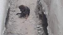 YAVRU KÖPEK - Çenesi Kırılan Yavru Köpek İçin Seferberlik