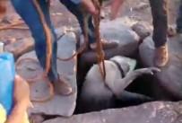 KÖPEK - Su Kuyusuna Düşen Köpeği Vatandaşlar Kurtardı