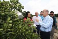 İSMAİL HAKKI ERTAŞ - Vali Demirtaş Açıklaması 'Akdeniz Meyve Sineğine Karşı Tüm Tedbirleri Aldık'