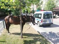PAZAR ALIŞVERİŞİ - Zabıta At Sahibini Aradı