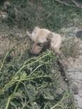 Çamura Saplanan Köpeği İtfaiye Kurtardı