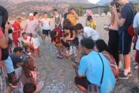 DENİZ KAPLUMBAĞALARI - Caretta Caretta Yuvasında Son 22 Yılın Rekoru Kırıldı