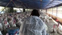 KÖPEK - Kocasından Devraldığı Hindi Çiftliğini Üç Kat Büyüttü