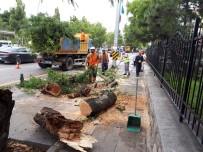 NEYZEN TEVFIK - Başkent'te Fırtınada Ağaçlar Devrildi