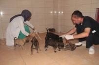 TOLGA AĞAR - Bitkin Halde Bulunan 20 Yavru Köpek Koruma Altına Alındı