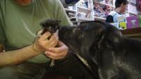 SOKAK KÖPEĞİ - (Özel) Köpek Yavru Kediye Annelik Yapıyor