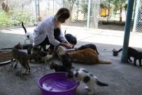 HASTALIK BELİRTİSİ - Veterinerden Hayvanlar İçin 'Su' Uyarısı