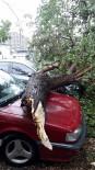 Araçların Üzerine Ağaç Düştü