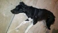 SOKAK KÖPEĞİ - Gaziantep'te Köpek Vahşeti