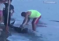 Gemlik'te Karaya Vuran Yunus Balığını Doğradılar!