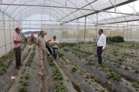 İl Müdürü Sarı'dan Çilek Bahçelerinde İnceleme