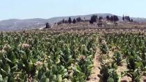 SIYONIST  - İsrail, Batı Şeria'da Terk Ettiği Yerlere Geri Dönüyor