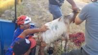 Sulama Kanalına Düşen Keçi AFAD Tarafından Kurtarıldı