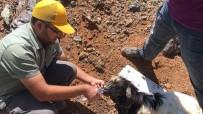 Yola Dökülen Zift, Hayvanlar İçin Büyük Tehlike