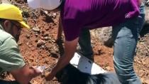 Zifte Yapışan Keçi Belediye Ekiplerince Kurtarıldı