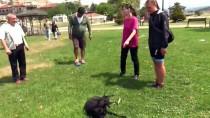 SOKAK KÖPEĞİ - Avusturyalı Gezgin Kaybettiği Köpeğine Kavuştu