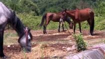 AHMET YAVUZ - Beykoz'daki atlar tahliye edilecek