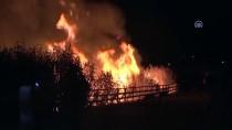 TÜLAY BAYDAR - Mogan Gölü Kıyısındaki Sazlık Alanda Yangın