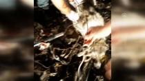 ÇÖP KONTEYNERİ - Telle Sarılıp Çöpe Atılan Köpeğe Belediye Sahip Çıktı