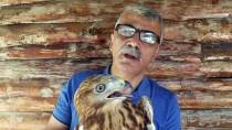 YIRTICI KUŞ - Baygın Bulunan 'Doğa Çöpçüsü' Koruma Altına Alındı