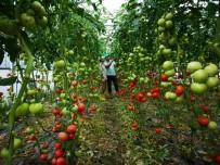 KıLıÇARSLAN - Büyükşehirden Çiftçilere Sera Desteği