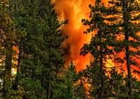 KALIFORNIYA - ABD felaketi yaşıyor! Binlerce kişi tahliye edildi