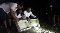MUHITTIN PAMUK - Kaplumbağa Yavruları Denizle Buluştu