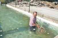 VAHDETTIN - Oksijensiz Kalan Balıklara Yeni Yuva