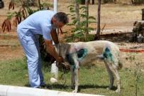 FETHIYE BELEDIYESI - O köpek bakıma alındı