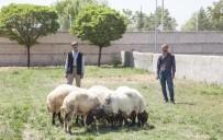 OVAKıŞLA - Ahlat'ta Hayvan Hırsızlığı