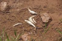 HÜSEYIN YıLMAZ - Balık Ölümleri Köylüleri Korkuttu