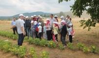 TAZE FASULYE - Çocuklara Doğayı Ve Tarımı Sevdirmek İçin 'Tarım Ve Çocuk' Etkinliği Düzenlendi