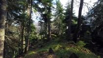 PıNARLAR - Ekoturizmin Yeni Merkezi Yenice Ormanları